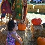 Pumpkin Patch Season