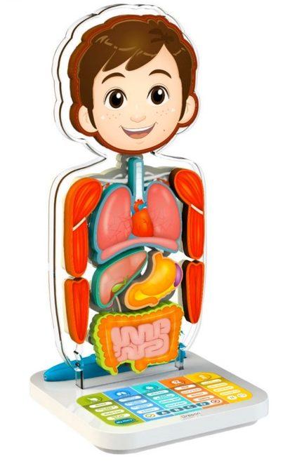Oregon Scientific SA218 Cuerpo humano interactivo