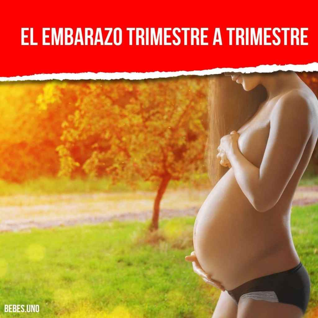 e6376763c Los mejores consejos para tu embarazo  lo mejor de la semana