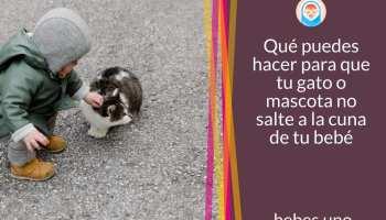 Qué puedes hacer para que tu gato o mascota no salte a la cuna de tu bebé