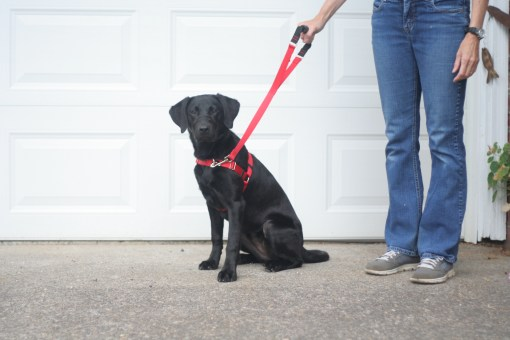 2 foot grippa leash and harness