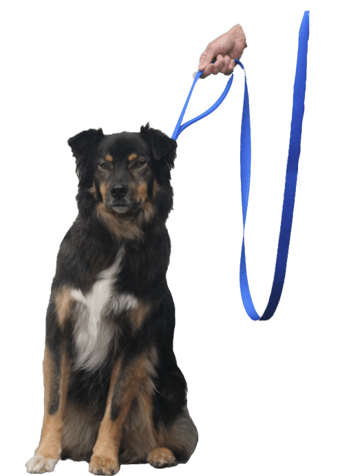 quick halt leash dog bebopusa pet leashes