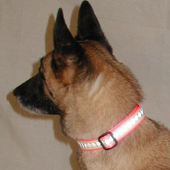 Glow-Flex Adjustable Collar