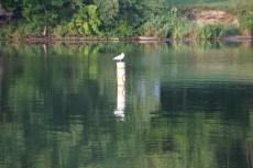 2017-08-21-Pymatuning State Park (3)
