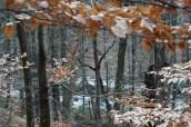 2018-01-12-Cunningham Falls-Trail to Falls