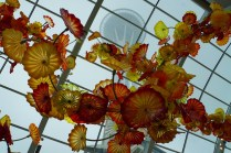 2017-09-09-Chihuly Garden and Glass (16)