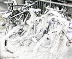 Snowed in bikes