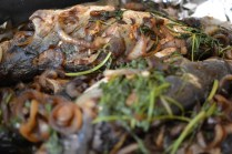 Grilled hamachi with caramelized onion and cilantro soy sauce