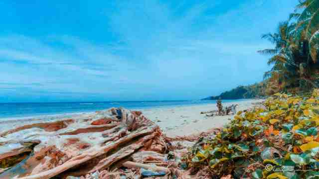 old log on an unexplored beach in colagsing beach resort santa maria davao occidental philippines