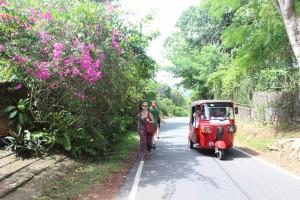 Walk to the Jungle B+B