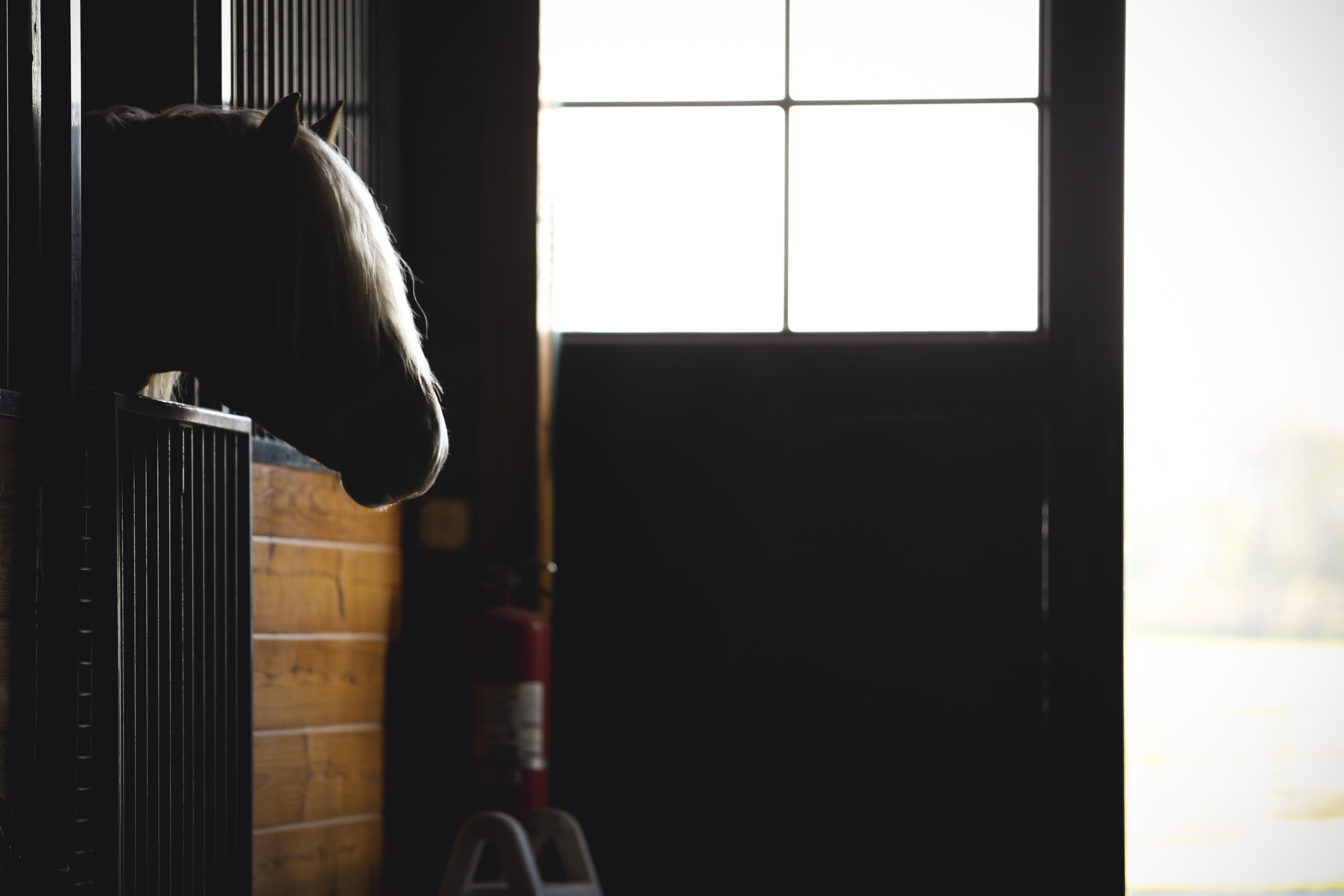 (c) Amanda Kolstedt Photography