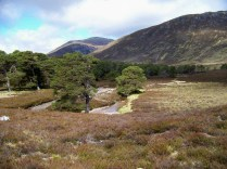 Carn á Mhaim pokes above the trees