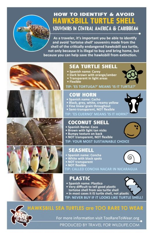 How to identify & avoid Hawksbill Turtle Shell infographic