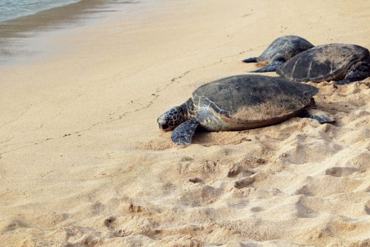 Turtle on beach, Photo by Isabella Jusková on Unsplash