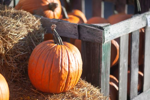 pumpkins, Photo by Katie Burkhart on Unsplash