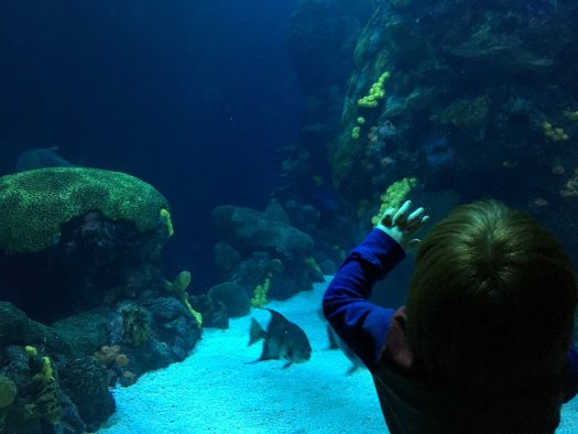 Photo of my son at the Tennessee Aquarium.