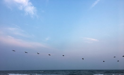 Pelicans flying in a line over the ocean near sunset.