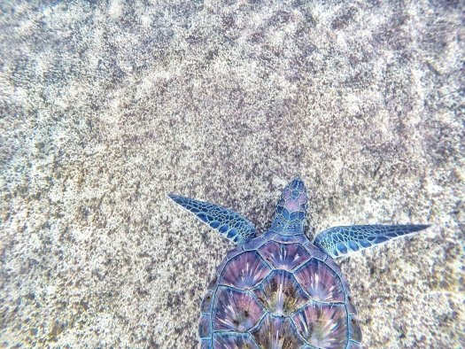Sea turtle on beach sand.