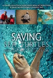 Saving Sea Turtles documentary image