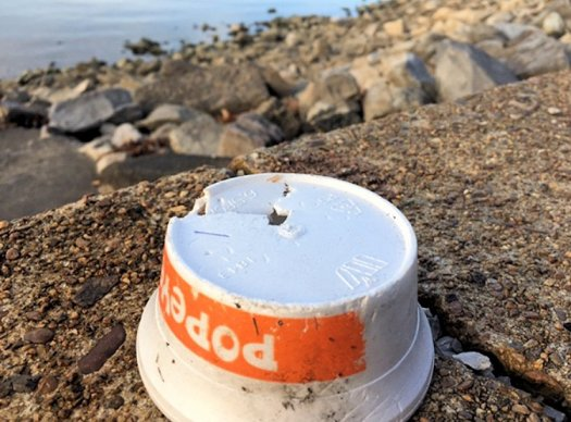 Polystyrene food container from Popeye's, sitting on the bank of the Tennessee River.