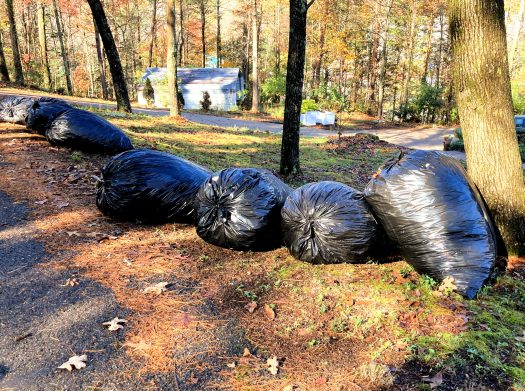 Leaves bagged in large plastic garbage bags