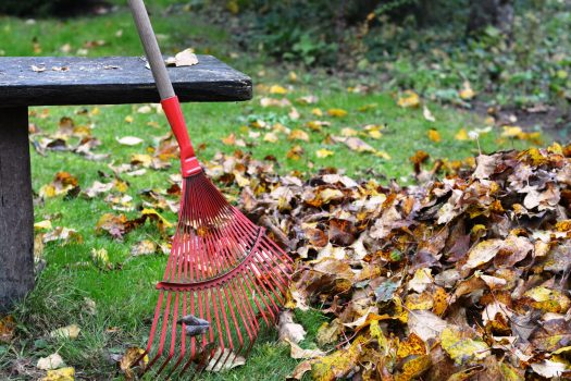 Raked leaves in yard with bench