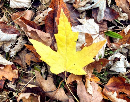 Yellow leaf on the ground