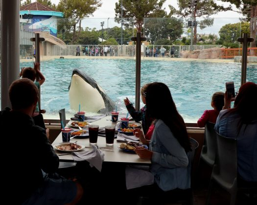 Dine with the Orcas programs