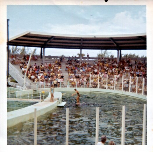 "Trainer ""surfing"" an orca at the Miami Seaquarium in the 1970s"