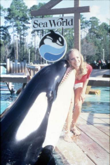 Orca performing at the Sea World attraction in Orlando, Florida.