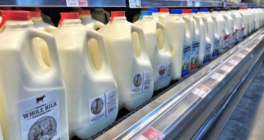Angled photo of plastic milk jugs at the supermarket.