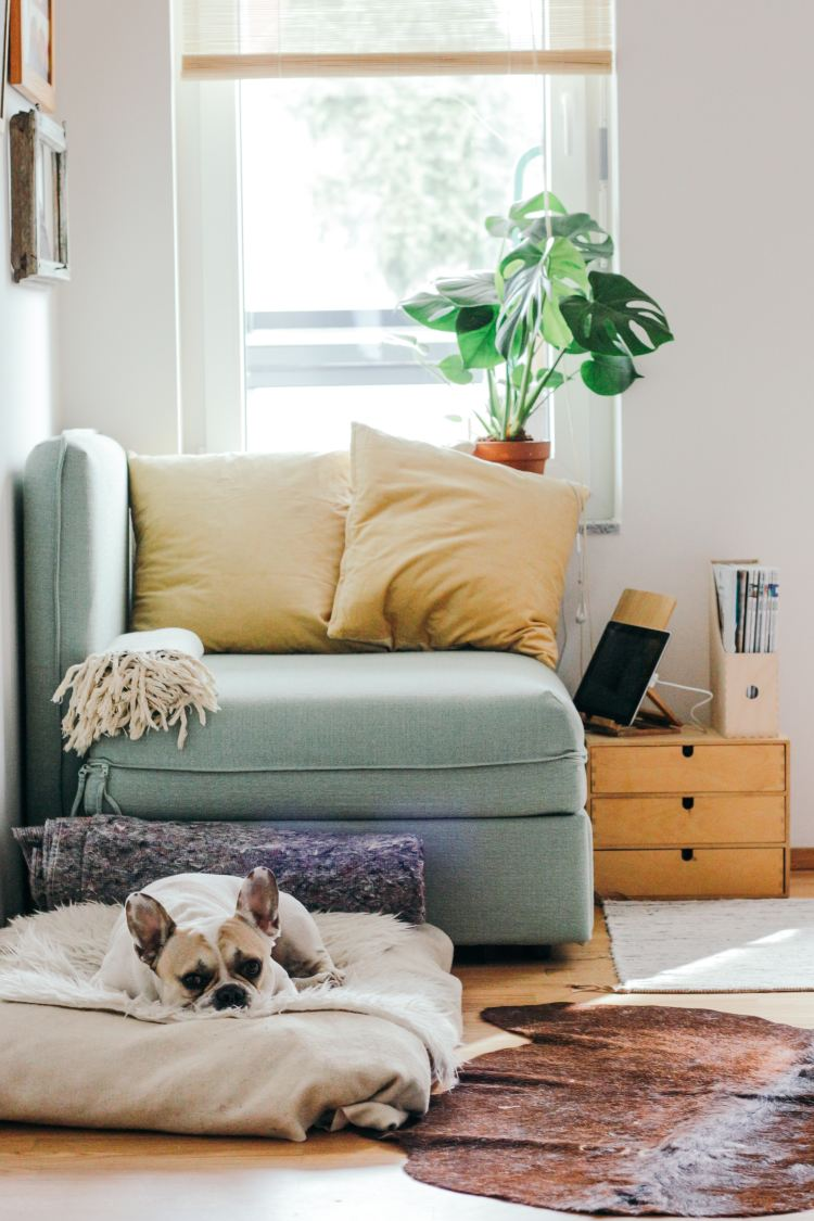 roo ith comfy chair with cushions and small dog laying on rug
