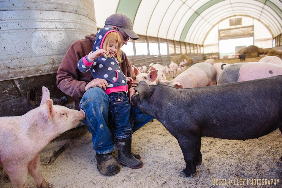 minnsota farm photographer pigs and little girl at hidden springs