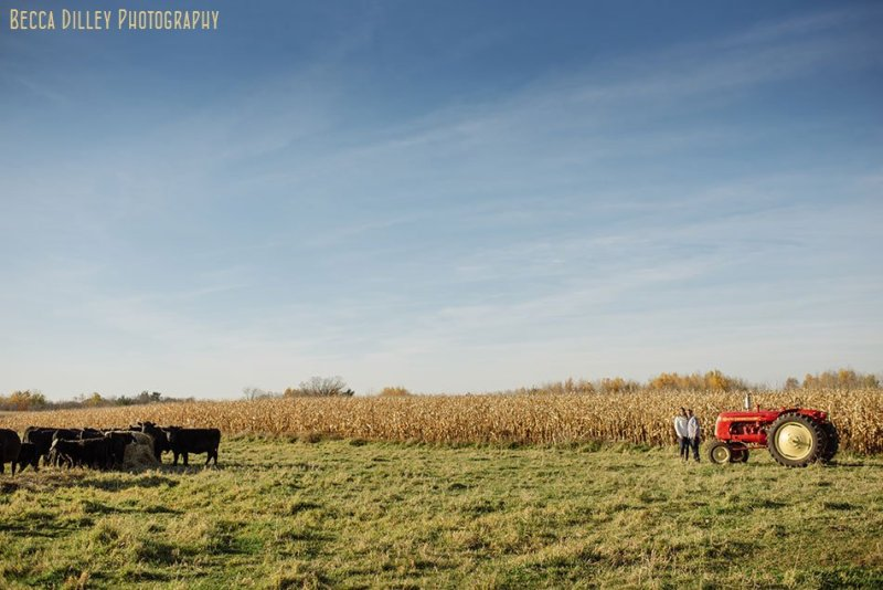 minnesota farm engagement photos with cows and tractors