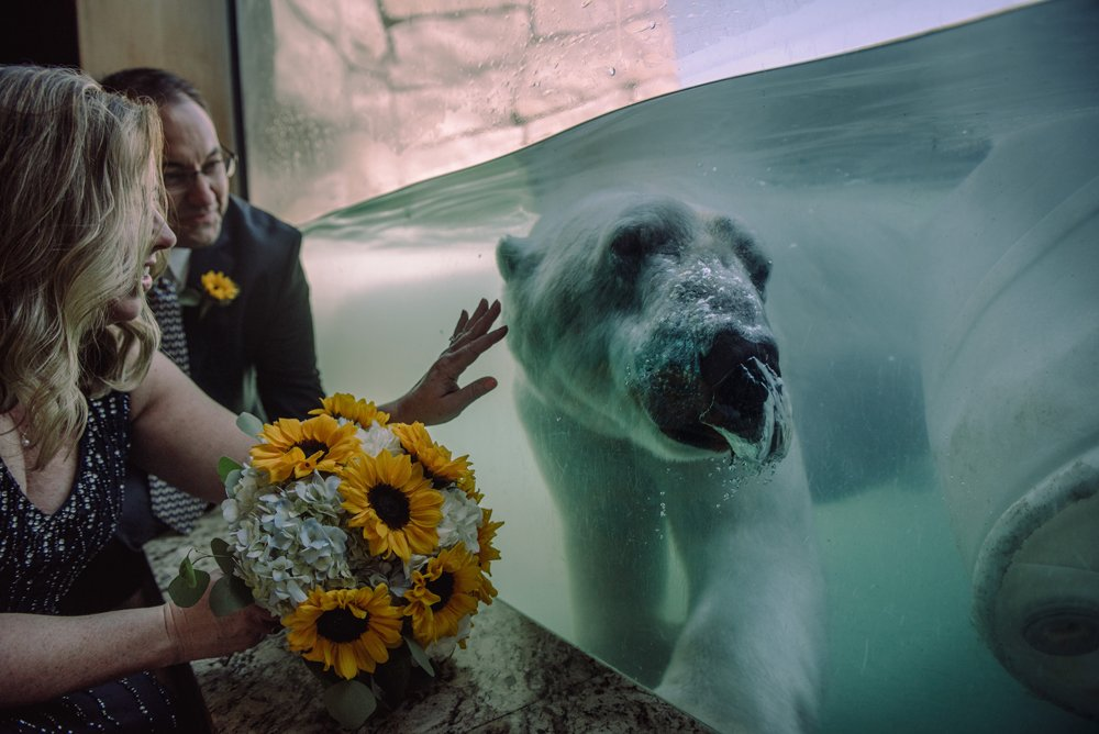 2017 favorite photos best Minneapolis photographer blue green couple with polar bear