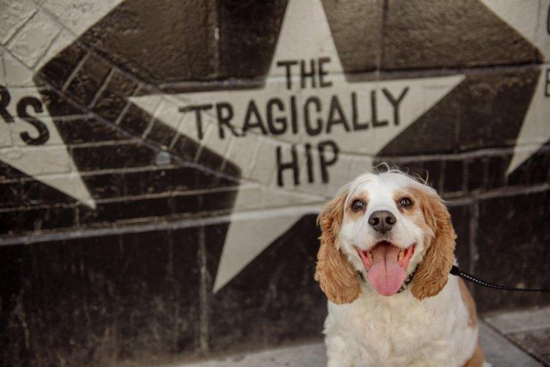 2017 favorite photos best Minneapolis photographer dog with star