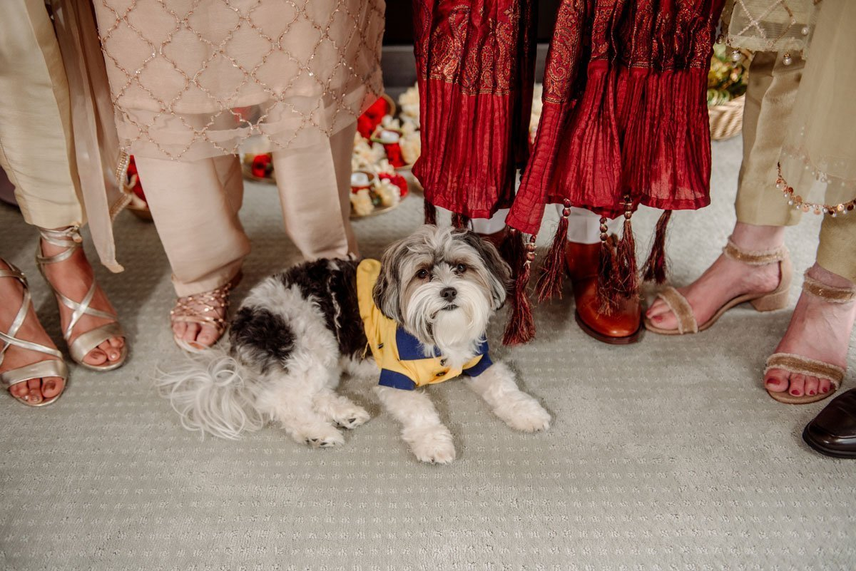 the family dog sits at feet of group who are well dressed before a muslim pakistani wedding in Minneapolis