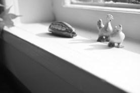 mossback_006