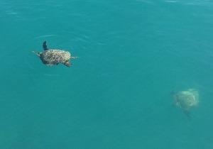 Turtles at Long Island