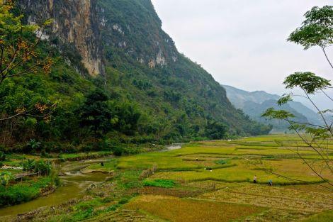 Risfält i dalen