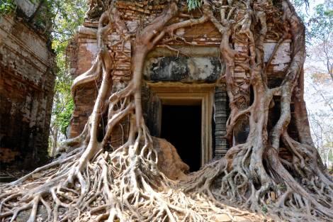 Träden vinner kampen i Koh Ker