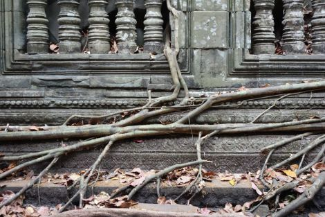 Rötter slingrar sig in och ut genom gångarna i Beng Mealea.
