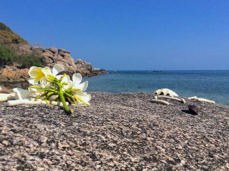 Några av mina favoritsaker, himmel och hav! Blomman, stenen, klippan, korallen och snäckan blev med av bara farten.