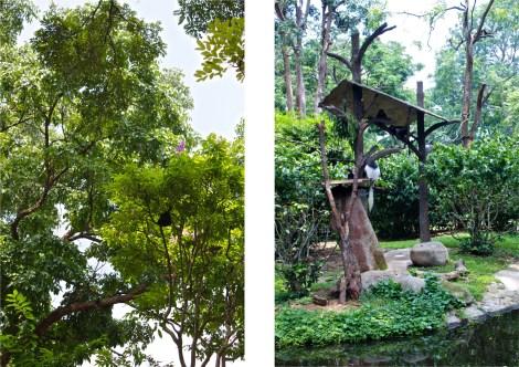 Titta alltid upp i träden! Det finns apor nästan överallt. Och vi hittade även ett fågelbo med nykläckta ungar vid sidan av jättesköldpaddorna. Det finns riktig natur i den artificiella parken.