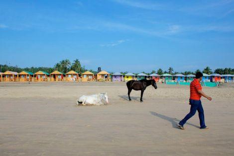 De vanligaste solbadarna på beachen är hästarna.