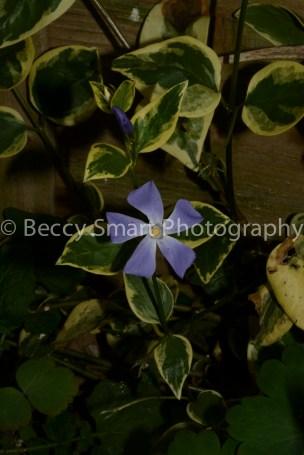 Lilac light