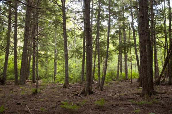 Community Forestry International: Actively Managing Forests Promoting Larger Forests Faster for More Carbon Storage