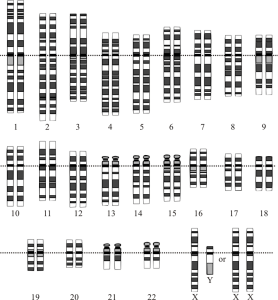 A graphic depiction of the human genome.