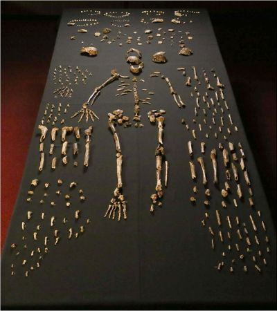 Some of the thousands of bone fragments found by Lee Berger's team in South Africa.