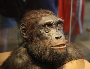 Scientists have reconstructed what Sahelanthropus tchadensis may have looked like.